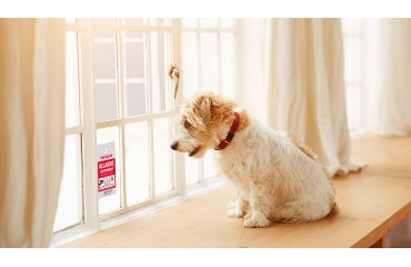 Antifurto: cosa fare in caso di animali in casa?